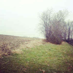 This is a recent picture of the edge of my yard and the neighbor's cornfield. Winter even looks depressing.