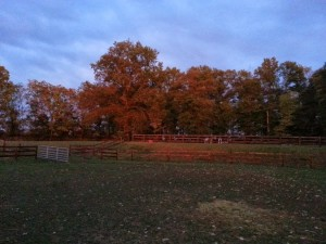 This is the view of the back field from the barn. Misty is standing up by the jumps.