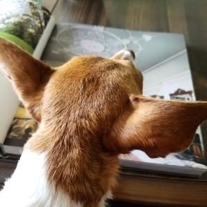 julep-reading