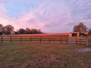 This is the view of the side field from Misty's stall.