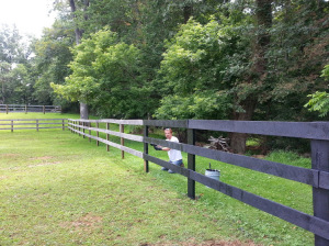 "This was the first day of fence painting. The look on my husband's face says, ""we need to hire someone for this - now!"""