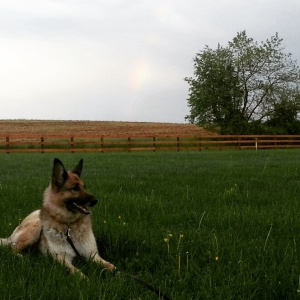 Puppy and a Rainbow